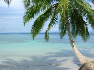palmtreeinbocas.jpg